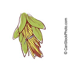 Vanilla sticks with leaves isolated vector icon