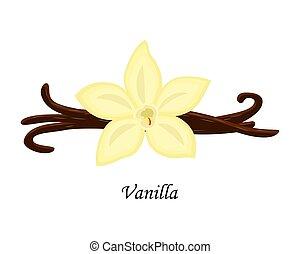 Vanilla vector illustration isolated on white background.