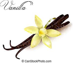 vanille, boîtiers, et, flower., vecteur, illustration.