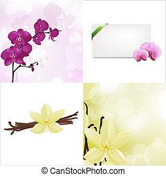vanille, ensemble, orchidées