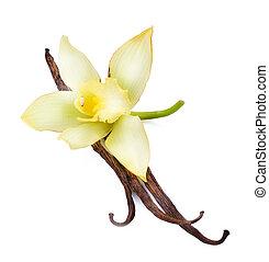 vanille, fleur, boîtiers