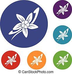 vanille, fleur, ensemble, bâtons, icônes