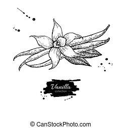 Caf vanille vecteur haricots dessin vanilla caf clipart vectoriel rechercher - Vanille dessin ...