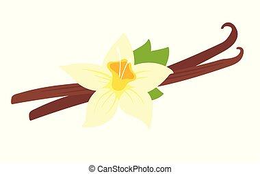 vanille, fleur, illustration