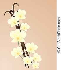 vanille, orchidée