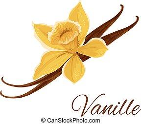 vanille, vagem, com, flor, isolado, ícone