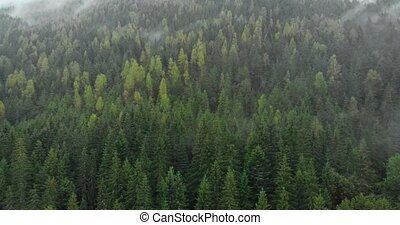 Vapor rises and condenses in timelapse, over the trees in ...