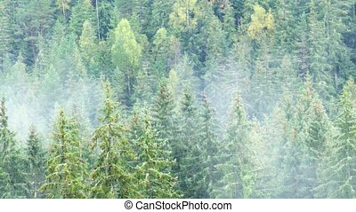 Vapor Rises and Drifts over Temperate Rainforests of ...