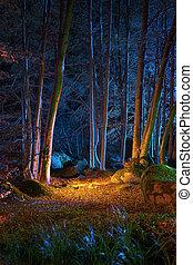 varázslatos, éjszaka in, a, erdő