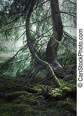 varázslatos, erdő
