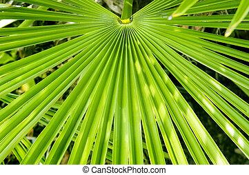 varenblad, palm
