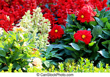 usines t fleurs jardin vari t usines garden color t vari t fleurs. Black Bedroom Furniture Sets. Home Design Ideas
