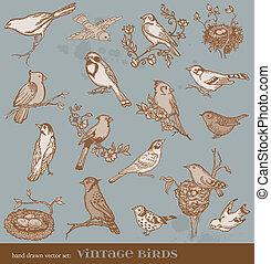 variété, vendange, -, main, vecteur, illustrations, dessiné, oiseaux, oiseau, set: