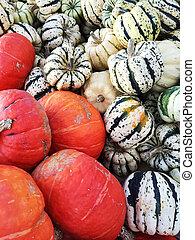 variëteit, kleurrijke, squashes