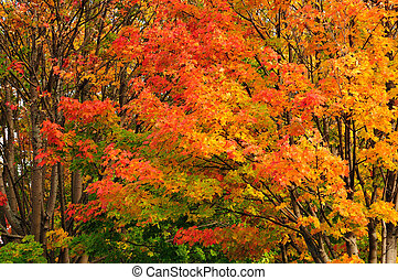 variado, colores, de, naturaleza