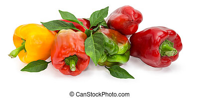 Varicolored bell peppers and twig with leaves on white background