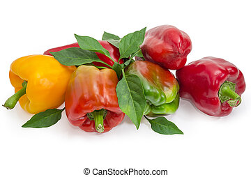 Varicolored bell peppers and twigs with leaves on white background