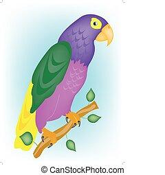 Varicoloured parrot on branch