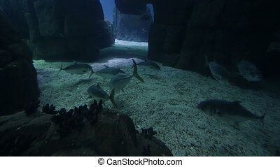 Varied fish and amphibians in a giant aquarium for...