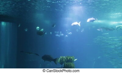 Varied fish and amphibians in giant aquarium for...