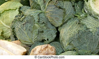 Varieties of cabbage, white, Brussels, broccoli, color on...