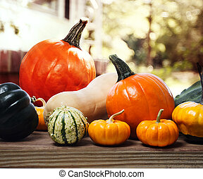 Varieties of pumpkins and squashes on rustic wooden boards with an shinning autumn garden backdrop