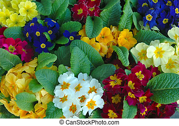 A variety of colors of flowers
