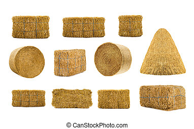 hay - variety by hays isolated on a white background