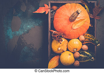 Variety decorative pumpkins. Autumn, Thanksgiving or Halloween concept, copy space