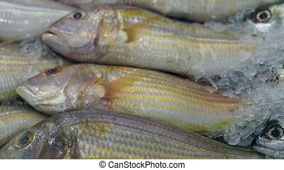 variety Fresh Fish on ice market