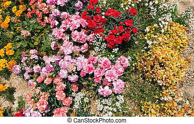 variety of blooming flowers on flower bed
