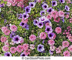 Variety of blooming flowers