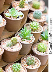 Variety of cactus pot plant.
