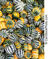 Variety of carnival squash at the autumn market.