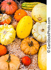 Variety of colorful autumn pumpkins on the market