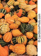 Variety of colorful Fall gourds