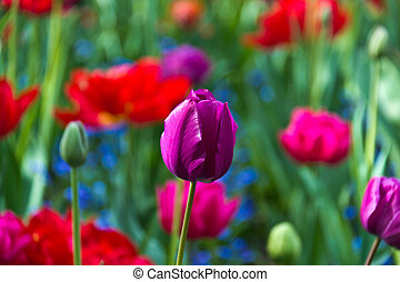 Variety of colorful flowers in bloom