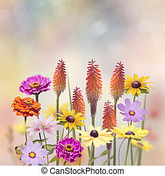 Variety of colorful flowers