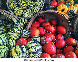 Variety of colorful squashes at the market