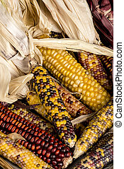 Variety of different colored Indian corn on display