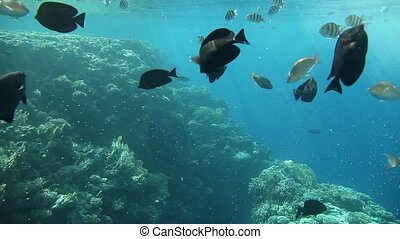 Variety of fish of the Red Sea - Diverse corals and fish in...