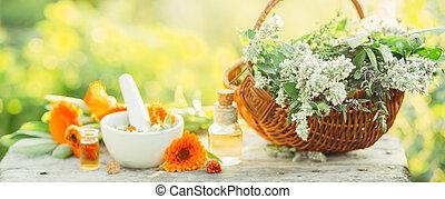 Variety of fresh herbs, calendula