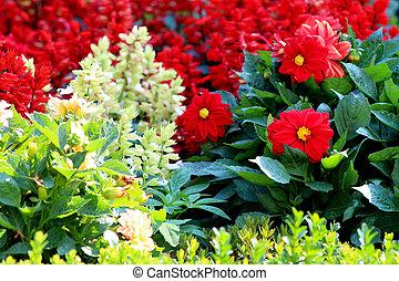 Variety of garden flowers