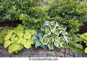 Variety of Hostas Plants and Shrubs Along Garden Brick Path Walkway