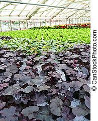 Variety of plants in a garden center