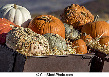 Variety of pumpkins in fall decoration display