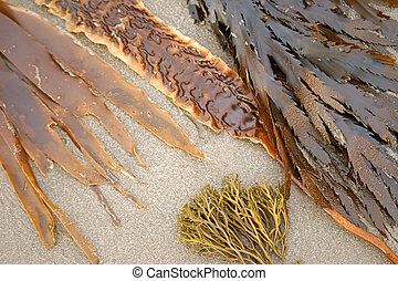 variety of seaweed on the sand in natural light