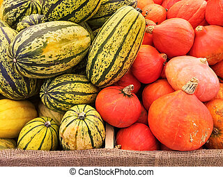 Variety of squashes at the autumn market
