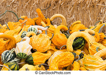 Variety of squashes