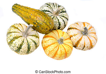 variety of sqush or gourds